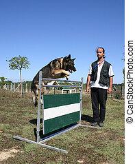 dog training - jumping purebreed german shepherd and man