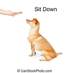 Dog Training Sit Down Command - A person giving a hand...