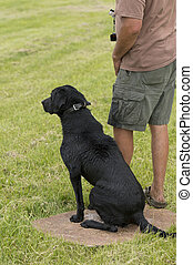Dog Training - A black lab being trained