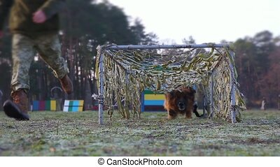 Training dogs in the army on an obstacle course - Dog ...