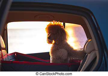 Dog traveling in a car seat the back seat of a car. Sunset.