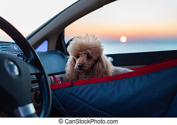 Dog traveling in a car seat the front seat of a car.
