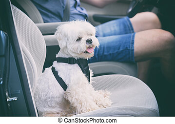 Dog traveling in a car