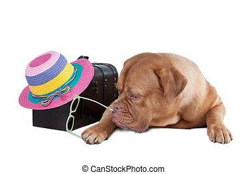 Dog traveller