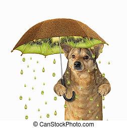 Dog under a kiwifruit umbrella 2