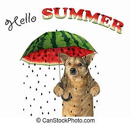 Dog under a watermelon umbrella 2