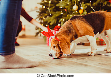 dog under the christmas tree at home