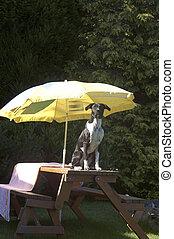 Dog under the parasol