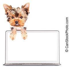 dog using a computer