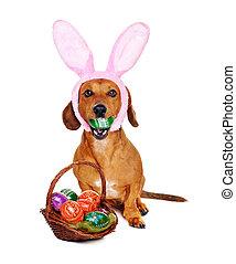 dog, vasthouden, de mand van pasen, met, kleurrijke, eitjes