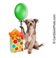 dog, vasthouden, feestje, balloon, met, cadeau