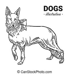 Dog vector hand drawn illustration, drawing, engraving, ink, line art, vector.