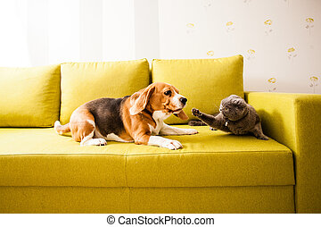dog vs cat - Angry cat doesn't want to play with dog on the ...