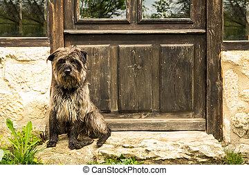 Dog Waiting in the Door