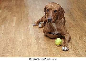 Dog waiting to play