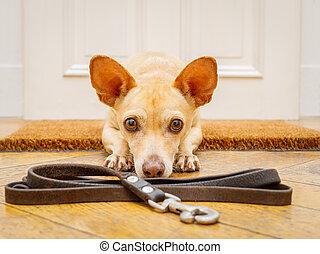 dog waits at door for a walk