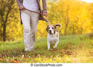 Dog walk - Senior woman walking her beagle dog in...