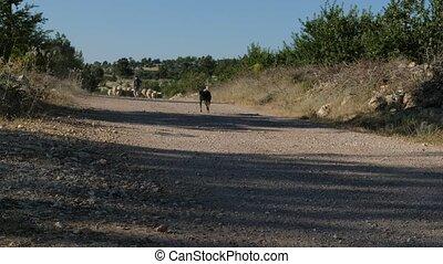 Dog walking empty field videos