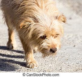 dog walking in nature