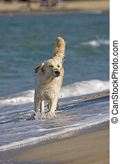 Dog walking in the water on the beach
