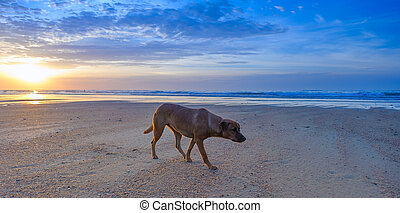 Dog walking on the beach. Ocean landscape background