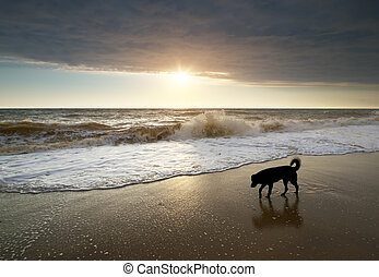 Dog walking on the beach.