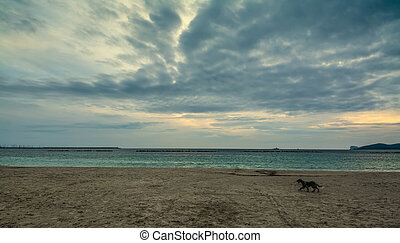 Dog walking on the beach under a cloudy sky at sunset