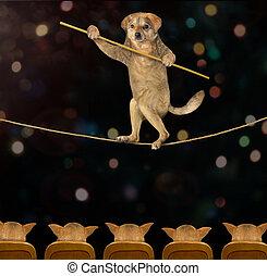 Dog walking on tightrope 3