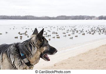 Dog Watching Birds