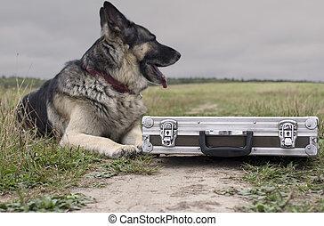 Dog Watching Briefcase
