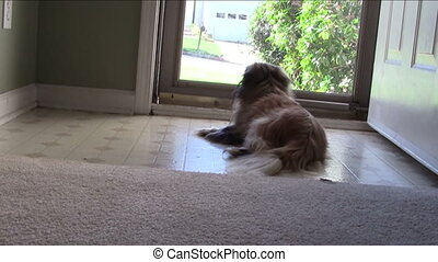 Dog watching out through front door