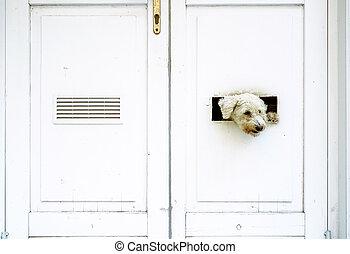 Dog watching outside