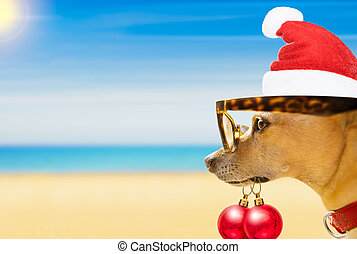 dog watching the beach on summer christmas holidays