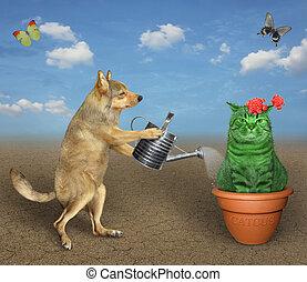 Dog watering cactus in desert