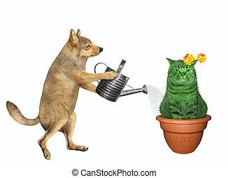 Dog watering cat cactus