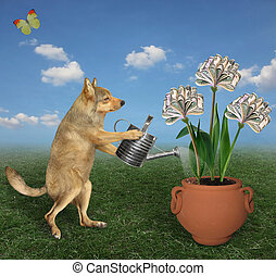 Dog watering money flower 2