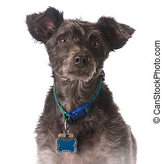 dog wearing a collar with a name tag on white background