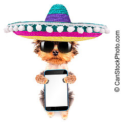 dog wearing a mexican hat with phone