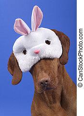 dog wearing a rabbit mask