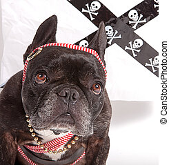 Dog wearing a scarf
