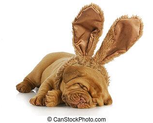 dog wearing bunny ears - puppy wearing bunny ears - dog de...