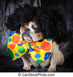 dog wearing clown costume