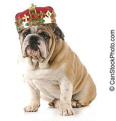 dog wearing crown - english bulldog wearing king's crown...