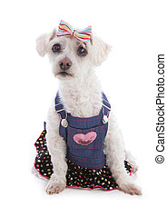 Dog wearing denim dress