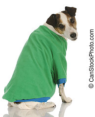 dog wearing dog sweater