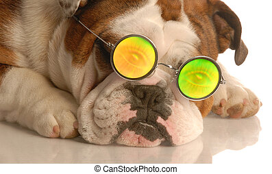 dog wearing funky glasses
