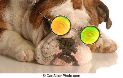 dog wearing funky glasses