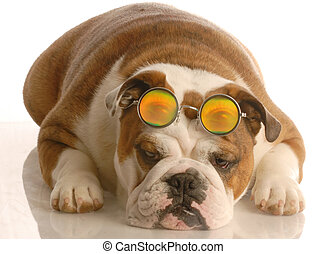 dog wearing funny glasses