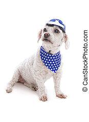Dog wearing helmet and bandanna