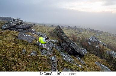 Dog Wearing Reflective Coat - Dog wearing reflective high ...